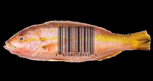 trazabilidad software de pescados