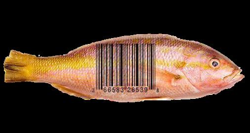 completa trazabilidad software pescados